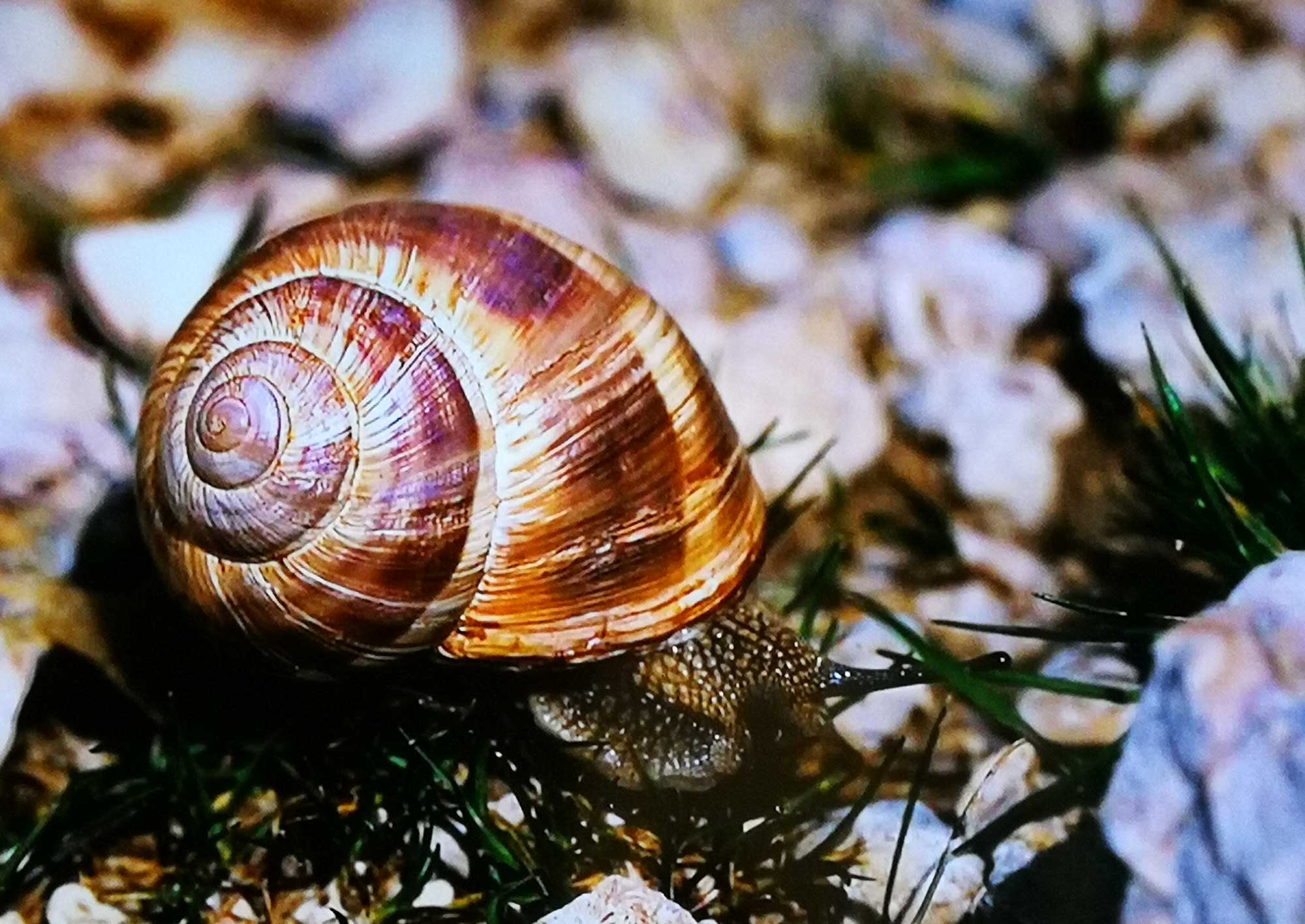 Fodele with Children:  Snail Farm and Fun