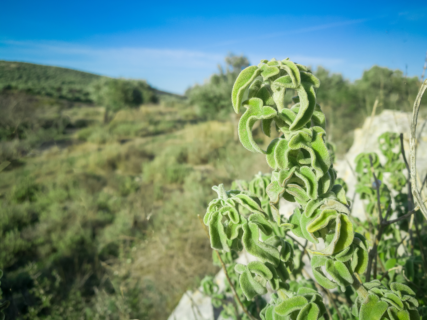 A brief guide to the precious Cretan wild herbs
